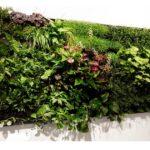 Quali piante scegliere per il proprio giardino verticale