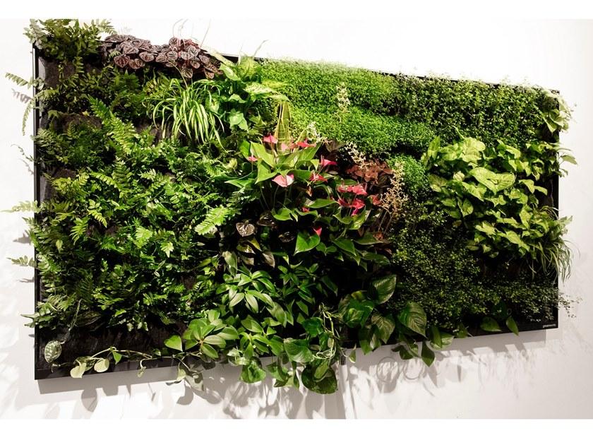piante per giardino verticale
