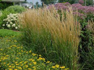 piante graminacee per giardino verticale