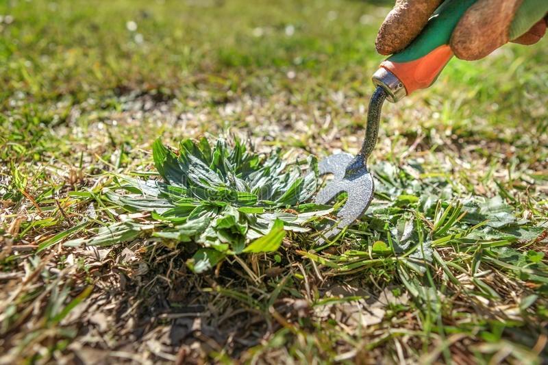 fitostimolanti per piante