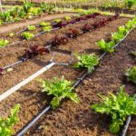 Irrigazione a Goccia: cos'è e come installare impianto in giardino