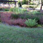 Rain Garden: cos'è e come progettare un giardino della pioggia