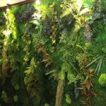 Manutenzione giardino verticale: come fare la ordinaria e straordinaria, benefici e costi