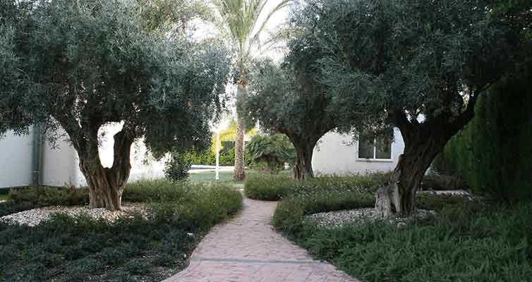 come sistemare giardino manutenzione
