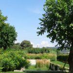 Alberi da giardini: idee e migliori alberi per il tuo giardino
