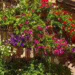 Piante da balcone: ecco le migliori idee piante per il tuo balcone