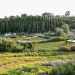 Dry Garden: cos'è e caratteristiche del giardino asciutto senza acqua