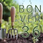 Bonus verde 2020: cos'è e come ottenerlo