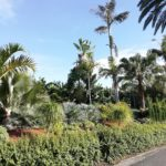 Giardini esotici: cos'è e come realizzare un giardino esotico