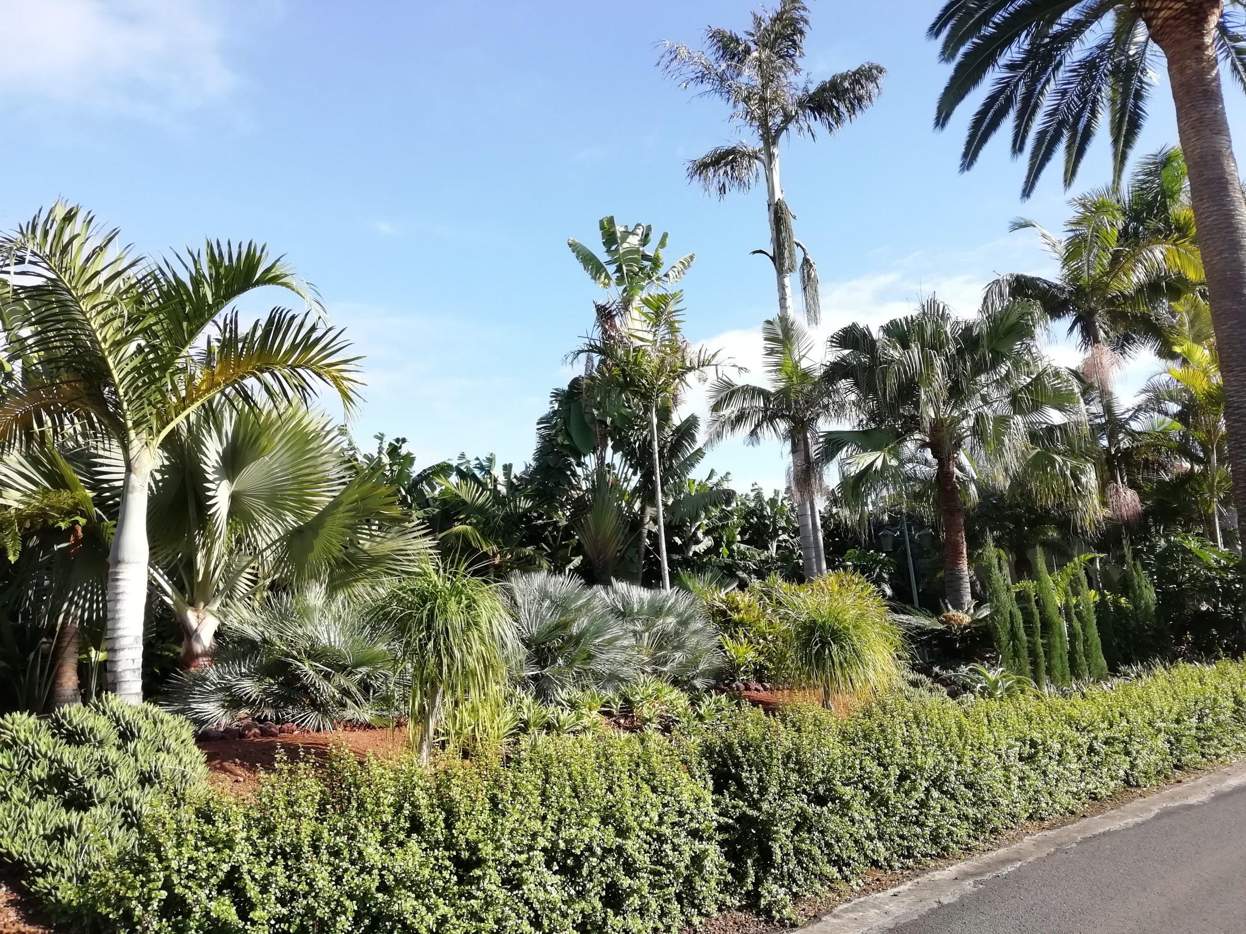 esotic garden