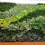 Green wall: cos'è, a cosa serve e vantaggi di un muro verde