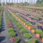 Flora mediterranea: caratteristiche, coltivazione e raccolta