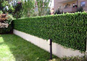 abbellire un giardino con edera