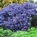 Piante da giardino perenni: 7 tipi di piante sempreverdi
