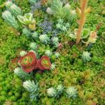 Piante grasse resistenti al freddo: le 5 migliori piante grasse per l'inverno
