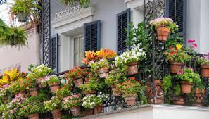 fiori sul balcone