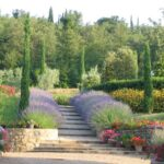 Giardino provenzale: Cos'è e come si realizza