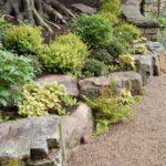 Giardino roccioso: cos'è e come realizzarlo