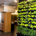 Parete verde: design per la tua casa