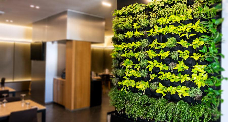 Piccolo giardino verticale in una casa