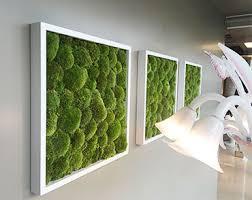 Muschio da parete utilizzato per creare dei veri e propri quadri