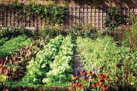 Bellissimo orto con una serie di alimenti in piena coltivazione
