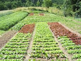 Una serie di coltivazioni di alimenti per l'orto