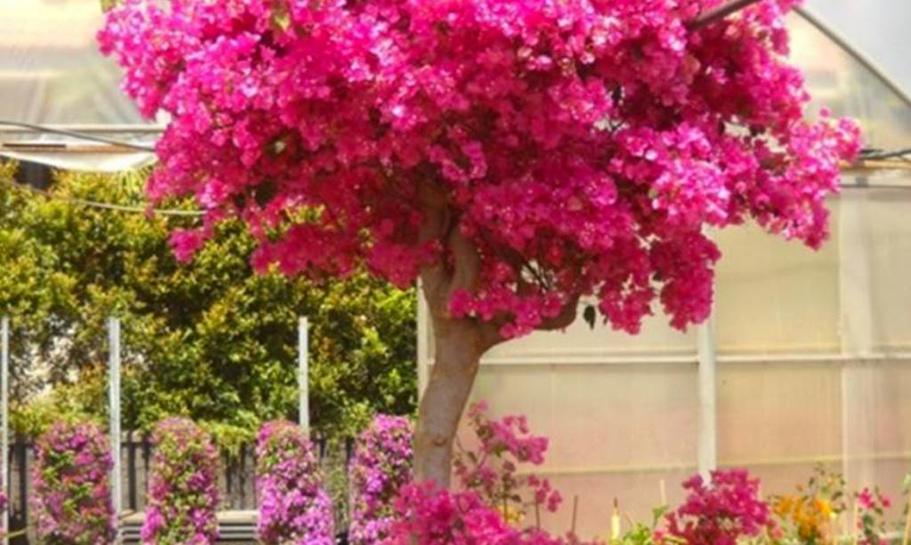 Catalogo piante perenni da fiore planeta srl for Piante da aiuola perenni