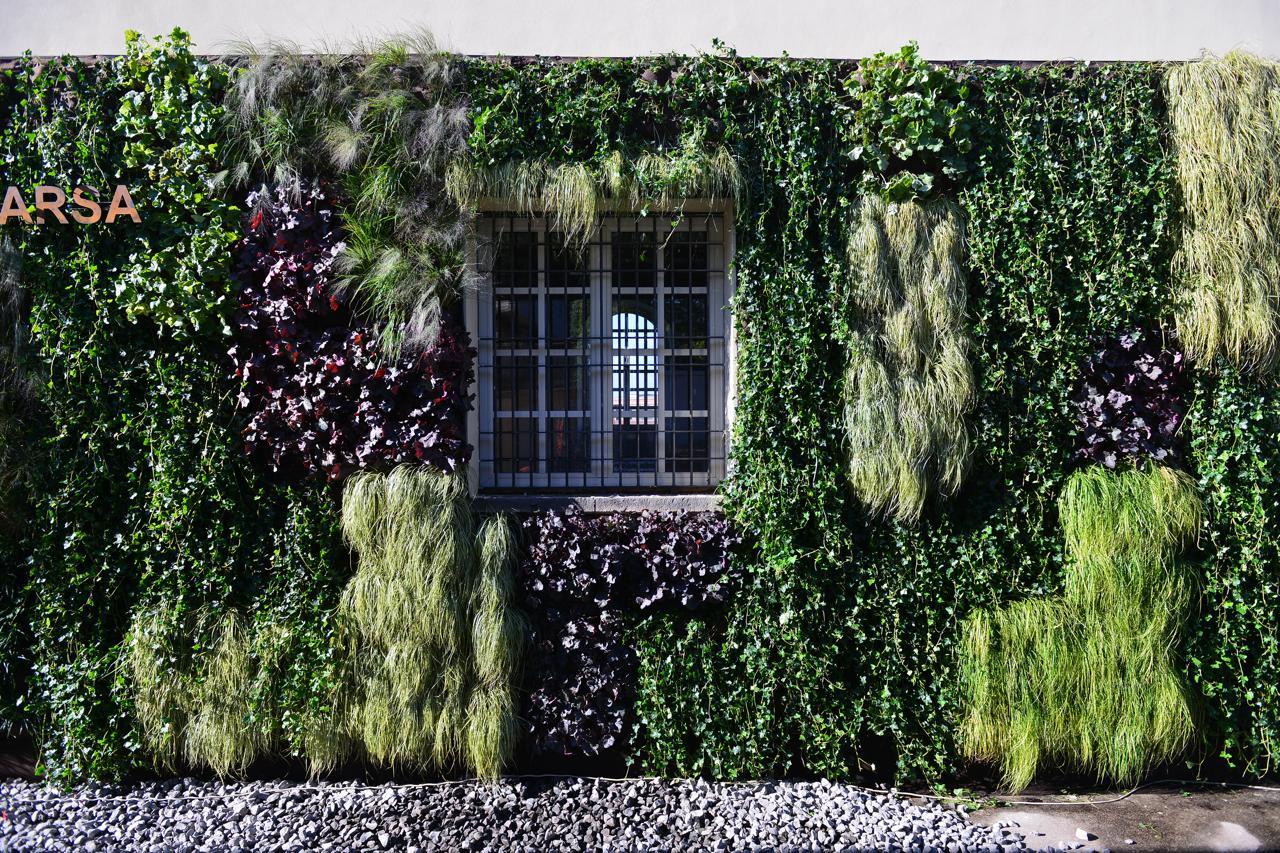 Quali piante scegliere per il proprio giardino verticale - Piante per il giardino ...
