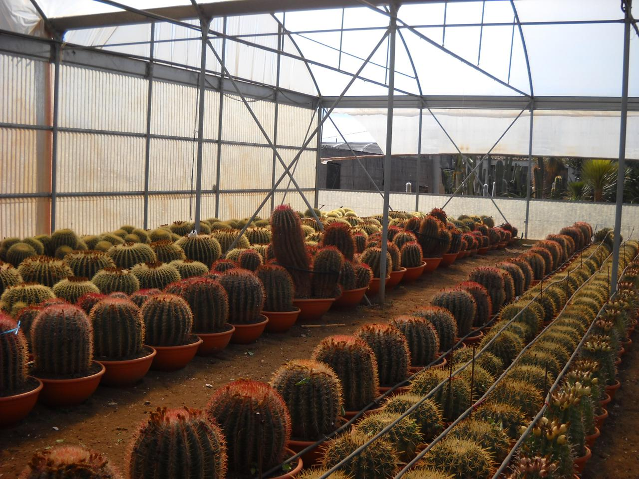 Catalogo piante grasse e succulente planeta srl for Piante grasse succulente