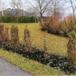 Quali accorgimenti per proteggere le piante dall'inverno