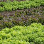 La storia dell'orto: da sussistenza a fonte di benessere psicofisico