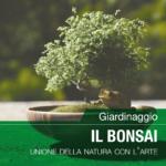 Giardinaggio – Il Bonsai