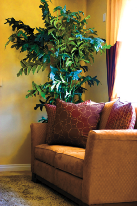 Indoor Plants Are Clean Air Machines!
