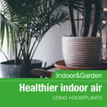 Planting Healthier Indoor Air