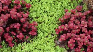 Come progettare un giardino da soli: la guida completa
