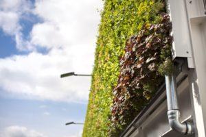 Giardino verticale esterno per edificio
