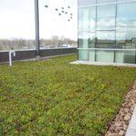 Giardino pensile estensivo esterno sul tetto