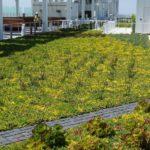 Giardino pensile estensivo sulla terrazza