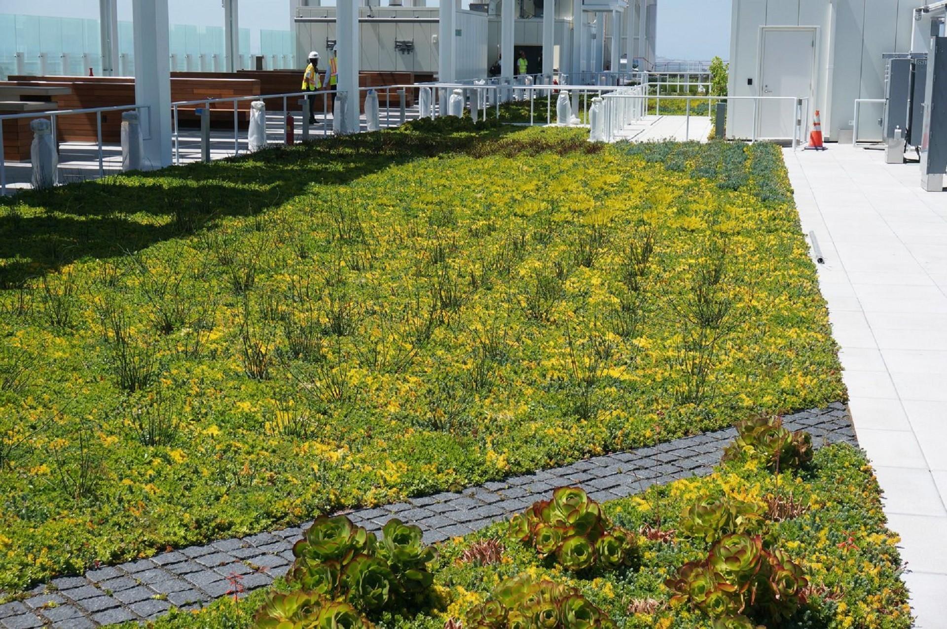 Esempio di giardino pensile estensivo sulla terrazza i for Arredo giardino carrefour 2017