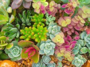 Giardino delle succulente