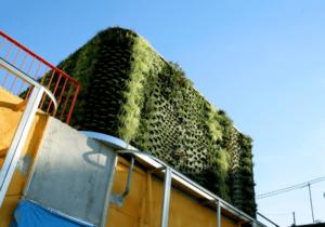 Muri verdi condominiali