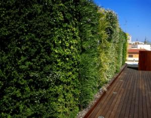 Giardino verticale esterno in capannone