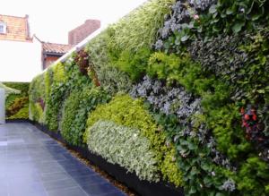 Giardino verticale esterno in cortile privato