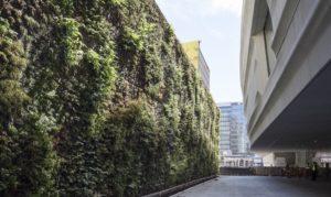 Giardino verticale esterno per uffici