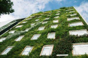 Giardino verticale esterno verde verticale
