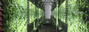 Biorganic vertical