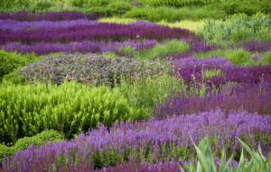 Giardino dei colori e profumi
