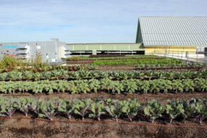 Orto giardino pensile su tetto