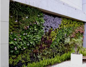 Giardino verticale esterno per villa privata